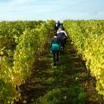 Ostfriesen kraxeln durc h die Weinberge