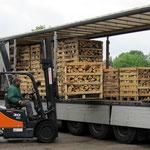 neue Lieferung mit Kaminholz (Rotbuche)