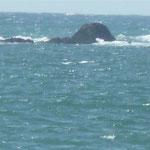 Kitesurfen in Ofir