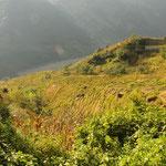 Abstieg durch Reisfelder