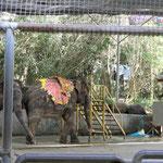 Elefanten-Show