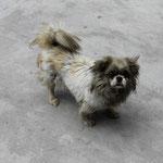 der coolste Hund Nujiangs. In Pihe an der Bus-Station