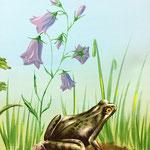 Wunder der Natur, Frosch