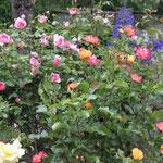 ...ein Blütenduft, der betört