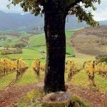 Vignoble AOP Irouleuy (10km)