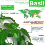 Basil benefits for health