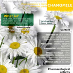Chamomile infography