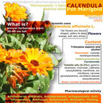 Pot marigold - calendula benefits