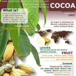 Cocoa benefits
