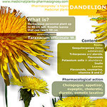 Dandelion infographic