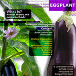 Infographic. Eggplant benefits