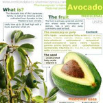 Avocado healt benefits