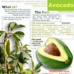 Avocado healt benefits