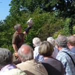 Flugvorführung mit Greifvögeln der Falknerei auf der Ronneburg (Foto: Hans Pfaff)
