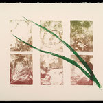Green leaves litho/mono print