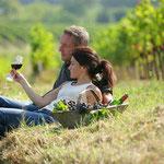 balade et découverte du vignoble audois