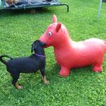 """Hallo, ich bald so groß wie ein """"Pferd"""" ...hi,hi"""