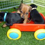 """Hab mein Wagen voll geladen, voll mit """"kleinen Babys""""  ;-)"""