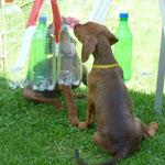 Die Flaschen muß man doch kaputt machen können..!!