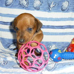 na, habe ich nicht ein schönes Spielzeug..?!!