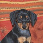 Alexa (Cora). Ist sie nicht ein Traumhund ??!!