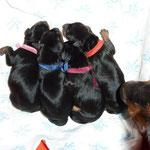 4 Welpen warten auf ihre weiteren Geschwister...