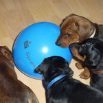 Mama sagt, das sind Luftballons. Und die können platzen!!