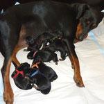 alle 8 Welpen kurz nach der Geburt !!!!