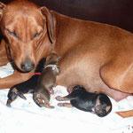 26.03.2012, die ersten drei Babys sind geboren....