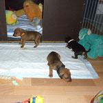 die Kleinen erkunden neugierig die neue Umgebung ;-)