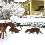 Hurra !! Spielen mit Mama im Schnee, das macht Spaß !!