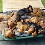 Alle 10 gemeinsam beim Schlafen !!