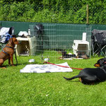 Alle unsere Hunde in Nürnberg, 20.06.2010