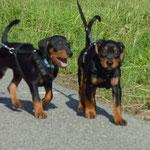 Cyrano und Cosmo auf ihrem ersten Ausflug an der Leine !!