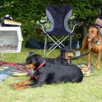 Sally, Geeva und Onnie ruhen sich im Schatten aus.