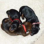 "Die drei ""Mädels"" am 01.10.2010, 1,5 Tage alt."
