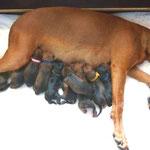 Hurra !! Es ist geschafft !! Alle 10 Babys und eine zufriedene Mama !!