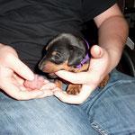 natürlich kann Rüde lila das auch...upsss, das war der Finger..