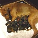 Alle haben die Geburt, gut überstanden !!