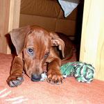 Balou mit seinem Lieblingsspielknochen !!