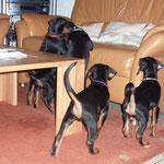 Was Kissen auf dem Sofa..die müssen runter..!!