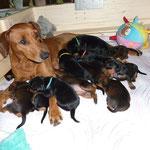 stolze Mama Onnie mit ihren 14 Tage alten Welpen ;-))