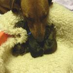 29.09.2010,  die ersten vier Welpen sind geboren !!