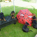 ...und trotzdem hat uns Frauchen einen Regenschirm gegeben!!