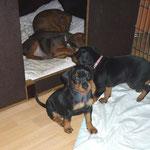 Booaah, jetzt ein kleines Schläfchen!! Black-Bonita will nur noch in die Schlafbox!!
