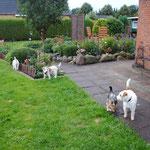 gemeinsam im Garten