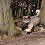 Herrlich ist es im Wald zu spielen.