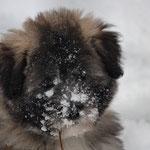 Alles erschnüffelt, coole Sache dieser Schnee.