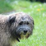 Nasser glücklicher Hund