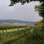Am Biesterberg